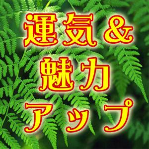 【運気&魅力アップ】行動/場所・持ち物/不運退け~社会での役割