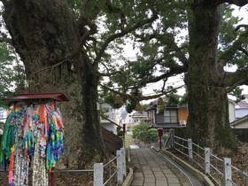 聖なる木巡礼「長崎・山王神社のクスノキ」