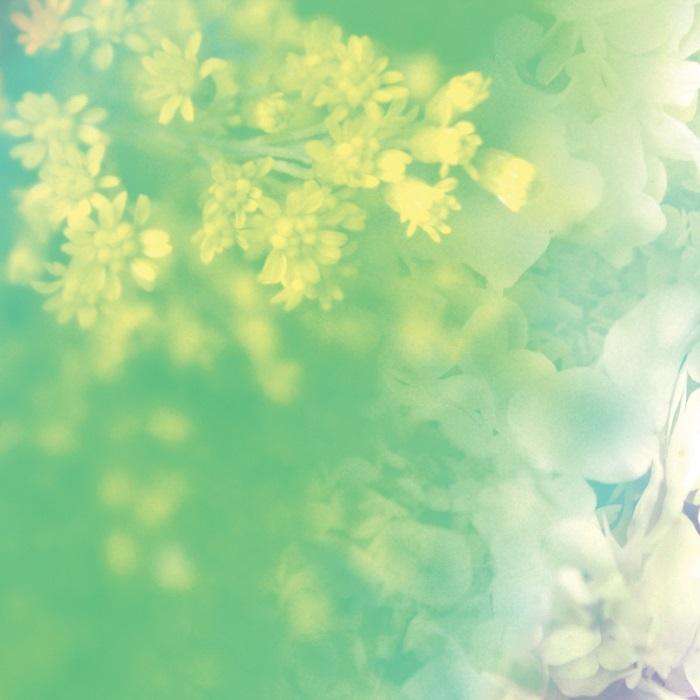9月の「フェアリー メッセージ」美香恋