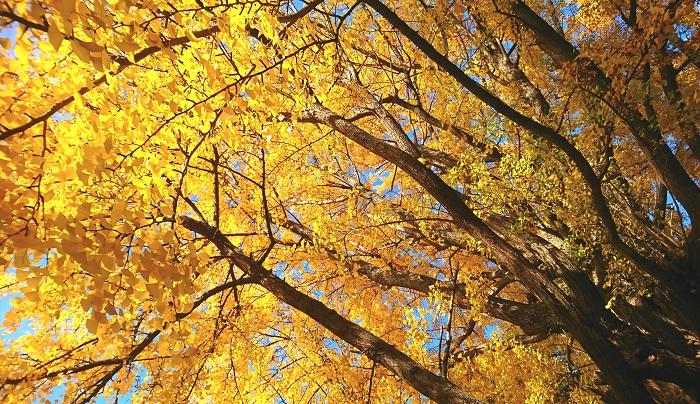 秋の恵みに思いを託す、おまじない