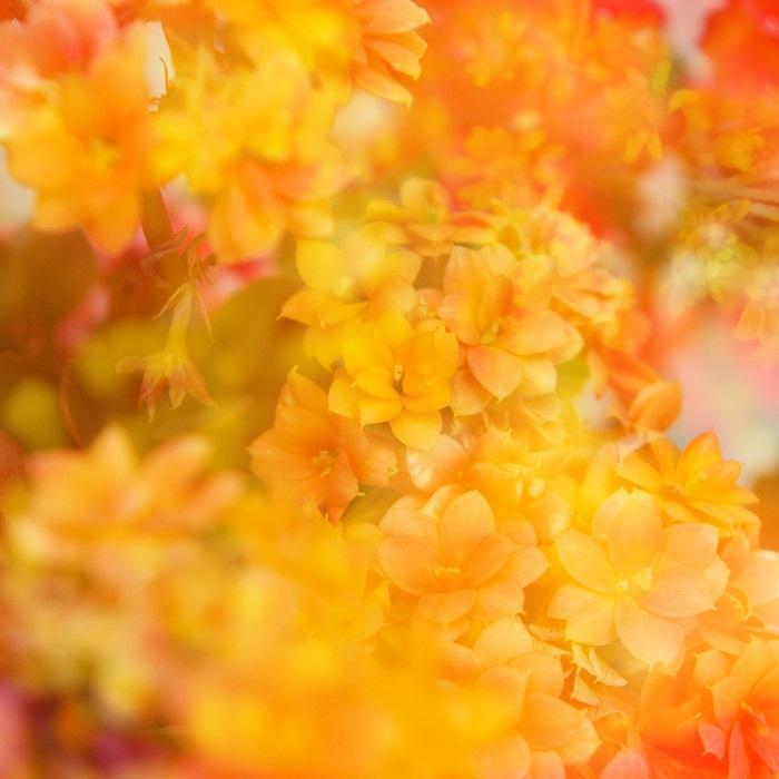 11月の「フェアリー メッセージ」美香恋