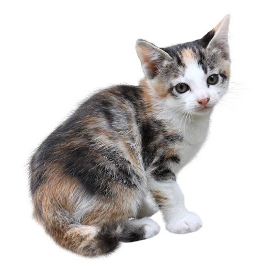 2月22日は猫の日! 猫にまつわるエトセトラ