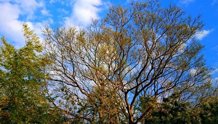 絆を結ぶ大きな木の力
