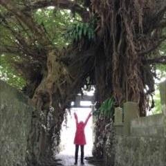 日本のご神木巡礼(長崎・五島編)~新上五島・奈良尾神社のあこう樹~
