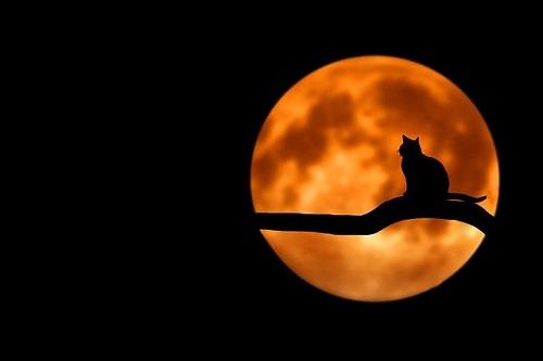 ハロウィンに訪れた、今は亡き愛猫……
