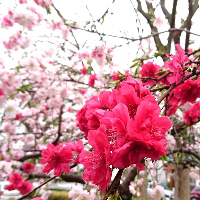 春に身の回りの物を新調して運気アップ!