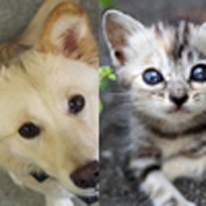 「猫好き」or「犬好き」でわかる恋愛性格